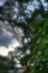 8541_hdr.jpg