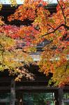 blog_kakura3.jpg