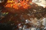 blog_kakura6.jpg
